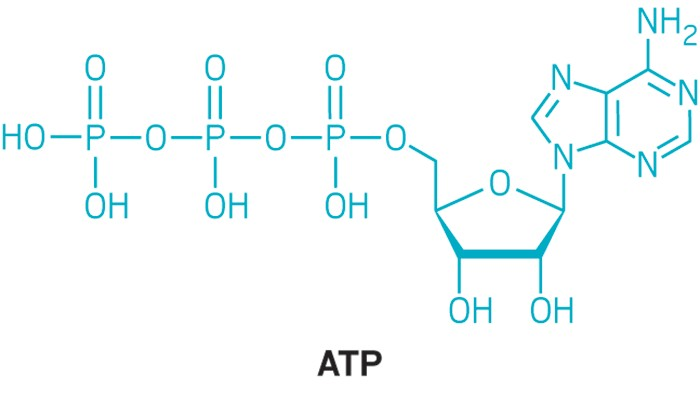 New Role In Cells Suggested For Atp