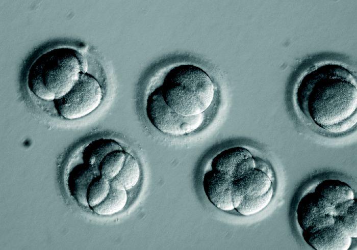 Doubts raised over validity of CRISPR-edited human embryo study