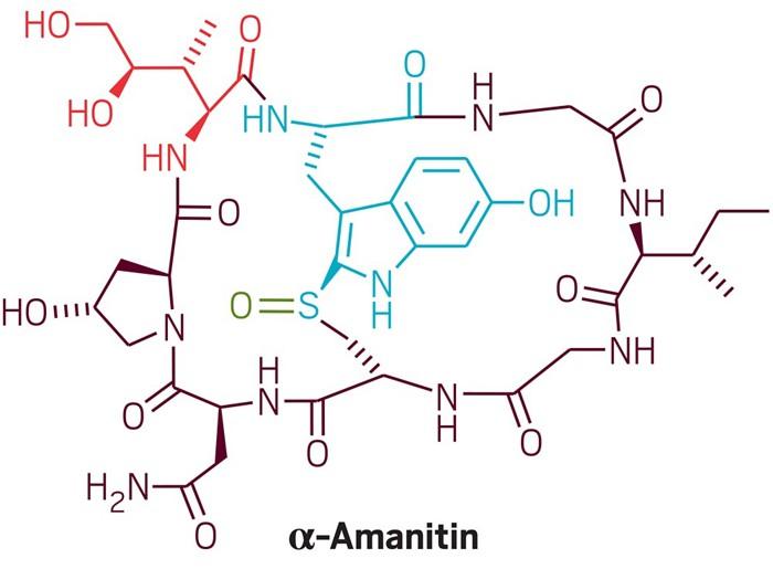 09614-scicon1-amanitin.jpg