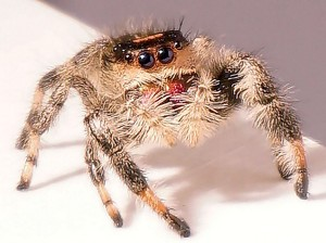09624-newscripts-spider.jpg