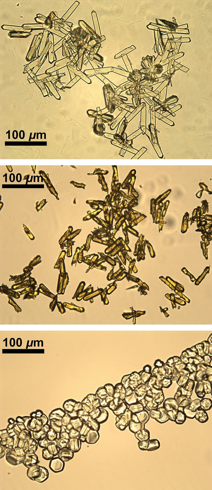 09629-scicon2-3micrographs.jpg
