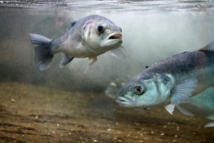 cn-fish.jpg