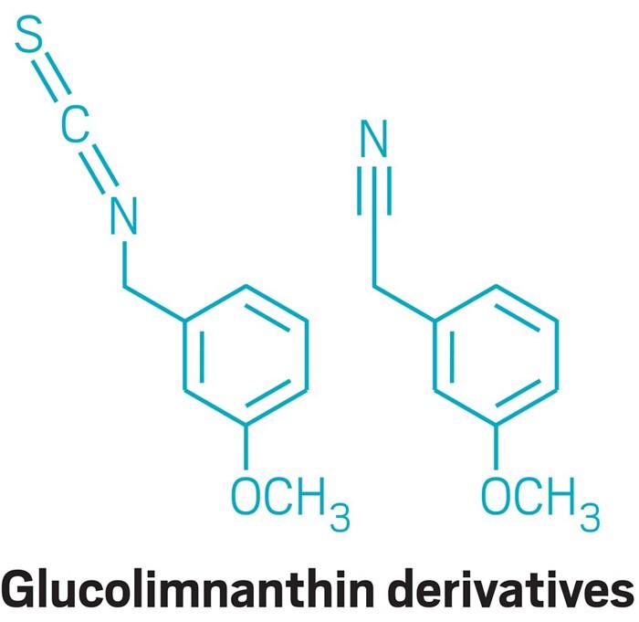 09632-feature2-glucolimnanthin.jpg