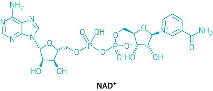 Firms feud over purported age-fighting molecule