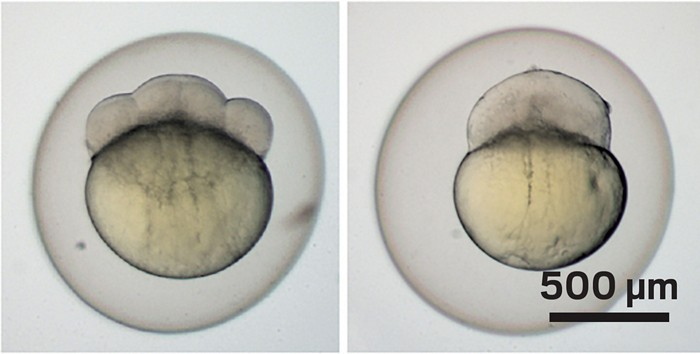 09637-scicon9-embryos.jpg