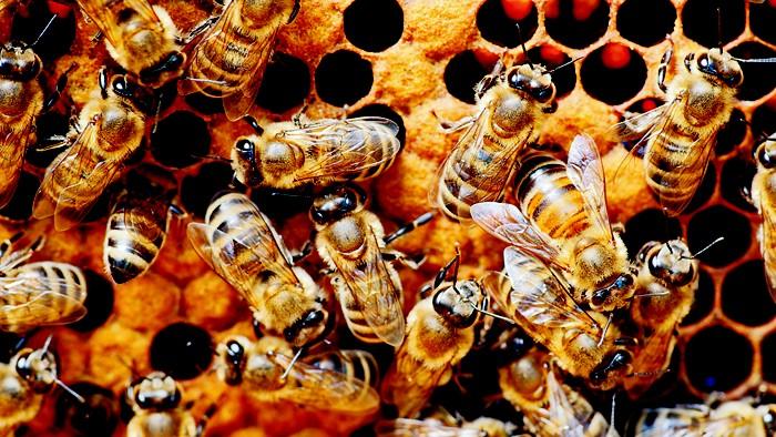 LN-honeybeescxd-es1.jpg