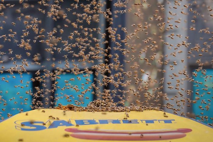 09642-newscripts-bees.jpg