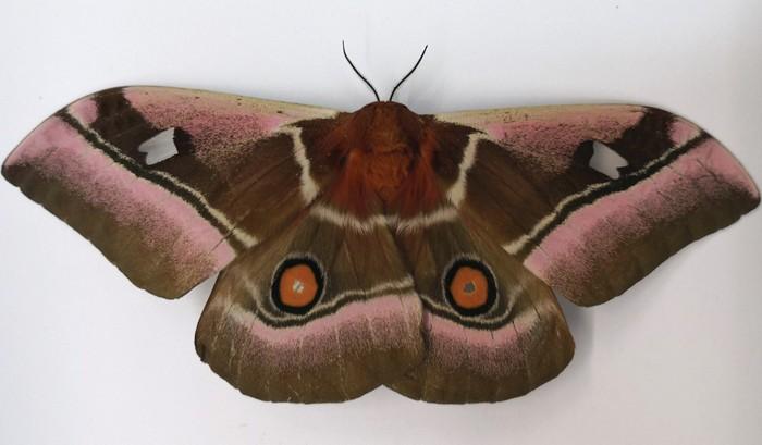 09646-scicon5-moth.jpg