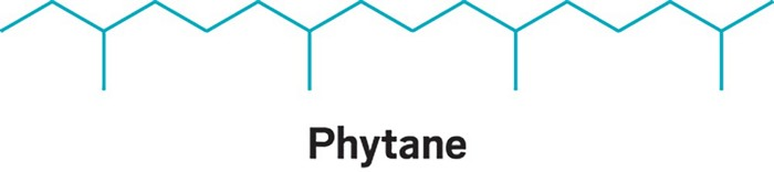 09648-scicon5-phytane.jpg