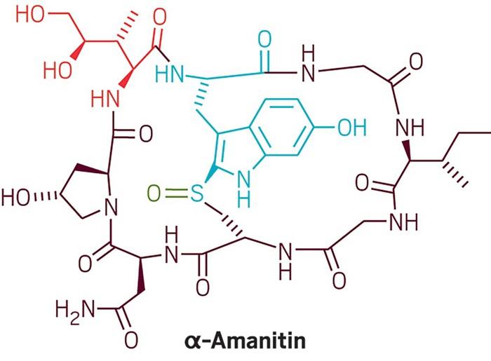 09649-cover12-amanitin-cn.jpg