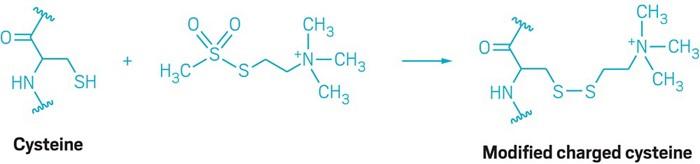 09635-leadcon-reaction-es.jpg