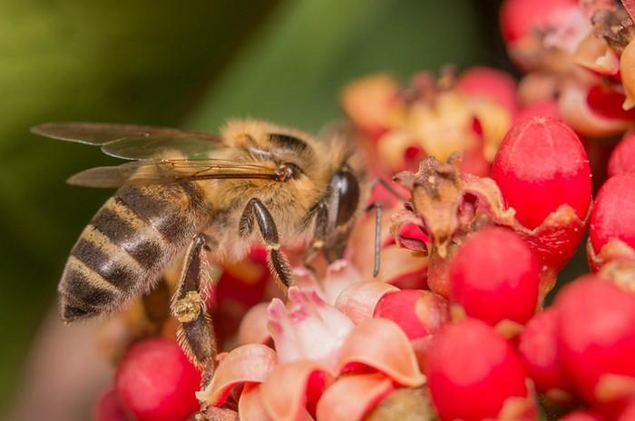 20180620lnp2-bees.jpg