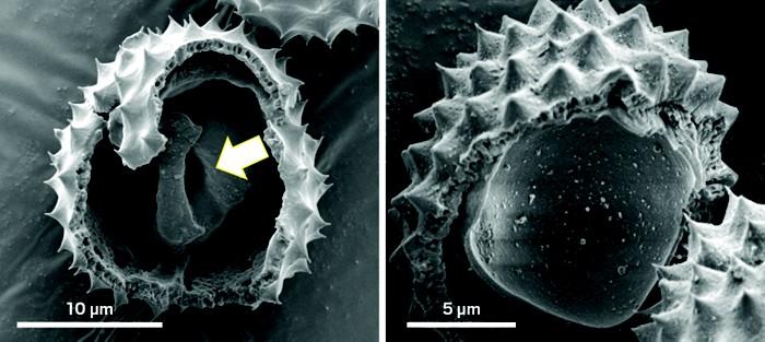 20180808lnp3-pollen.jpg