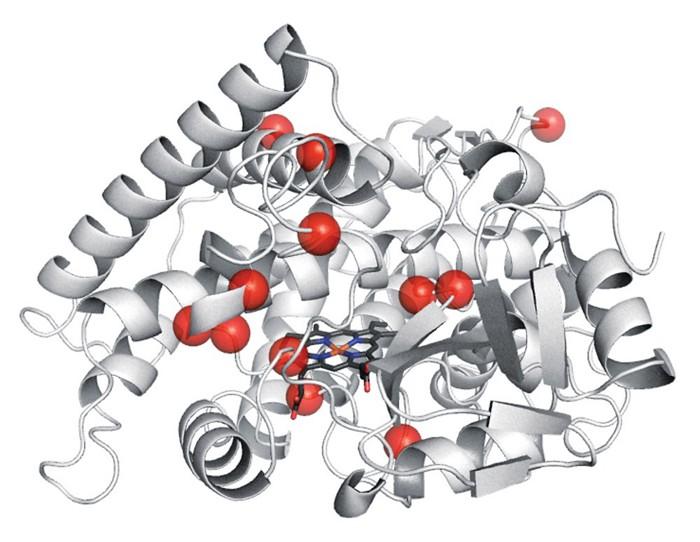 cn-LN-nobelenzyme.jpg