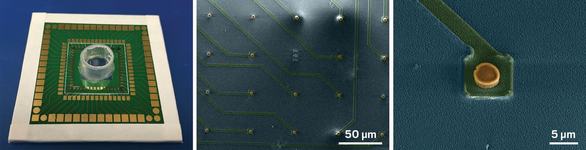 microelectrode1.jpg