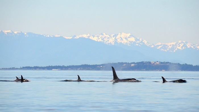 09717-polcon1-whales.jpg
