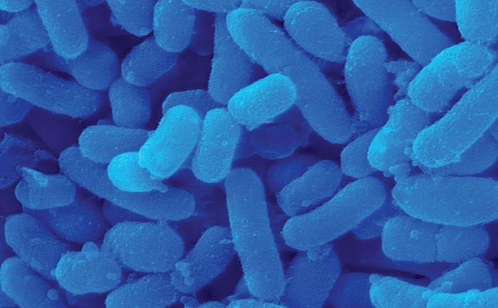 09702-scicon4-prokaryote.jpg