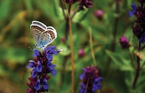09724-polcon30-butterflycxd-es.jpg