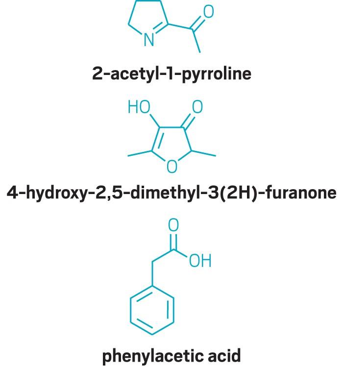 09725-scicon5-pyrroline.jpg