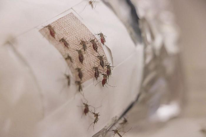 09734-scicon11-mosquitoscxd.jpg