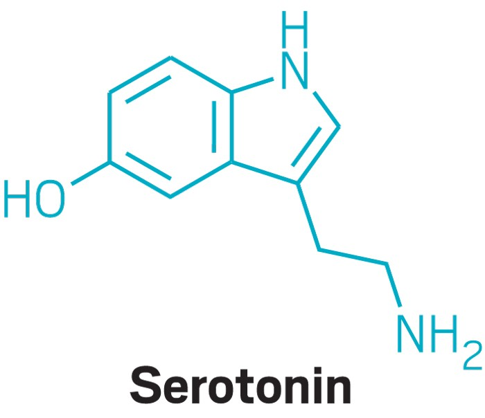 Serotonin helps gut microbes thrive