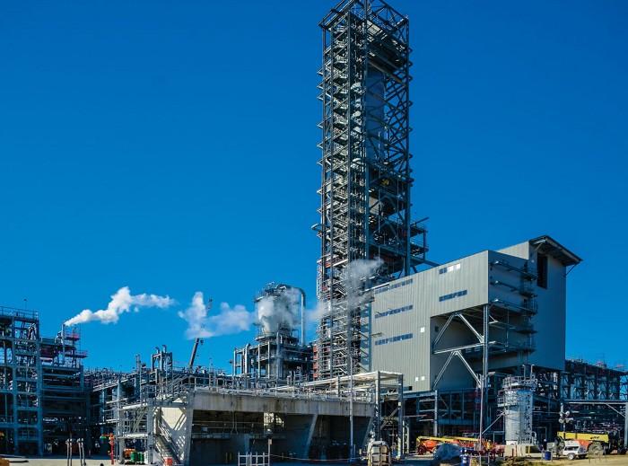 09743-buscon5-plant.jpg