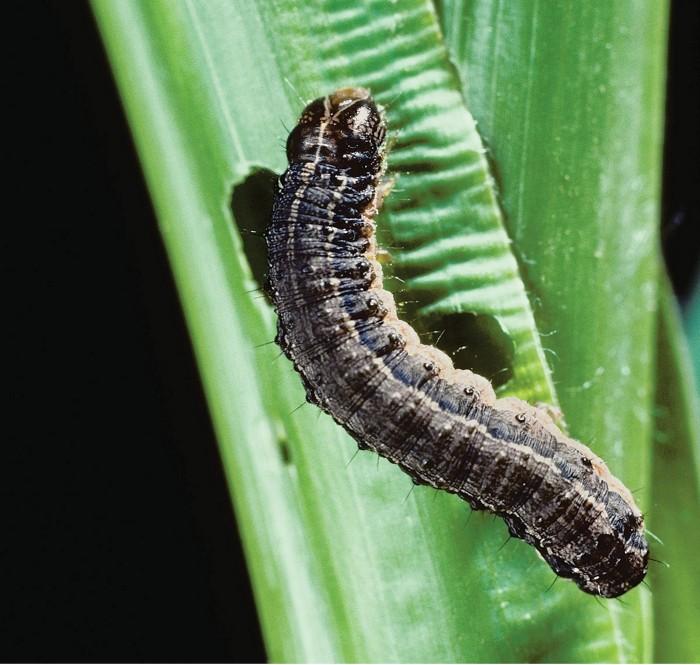 09744-cover12-worm.jpg