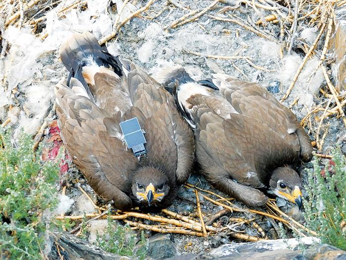 09744-newscripts-eagles.jpg