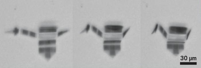 09744-scicon3-crane.jpg