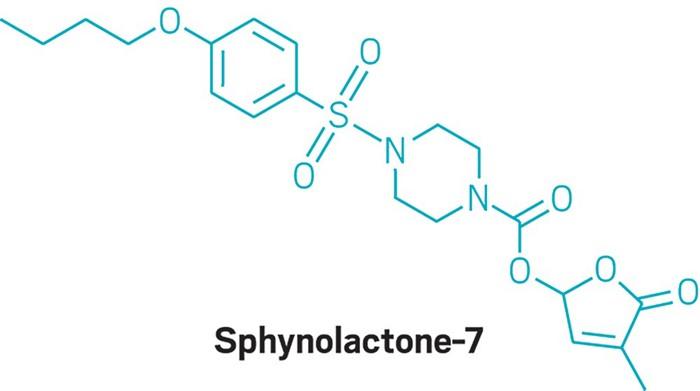 09708-feature4-sphynolactone7.jpg