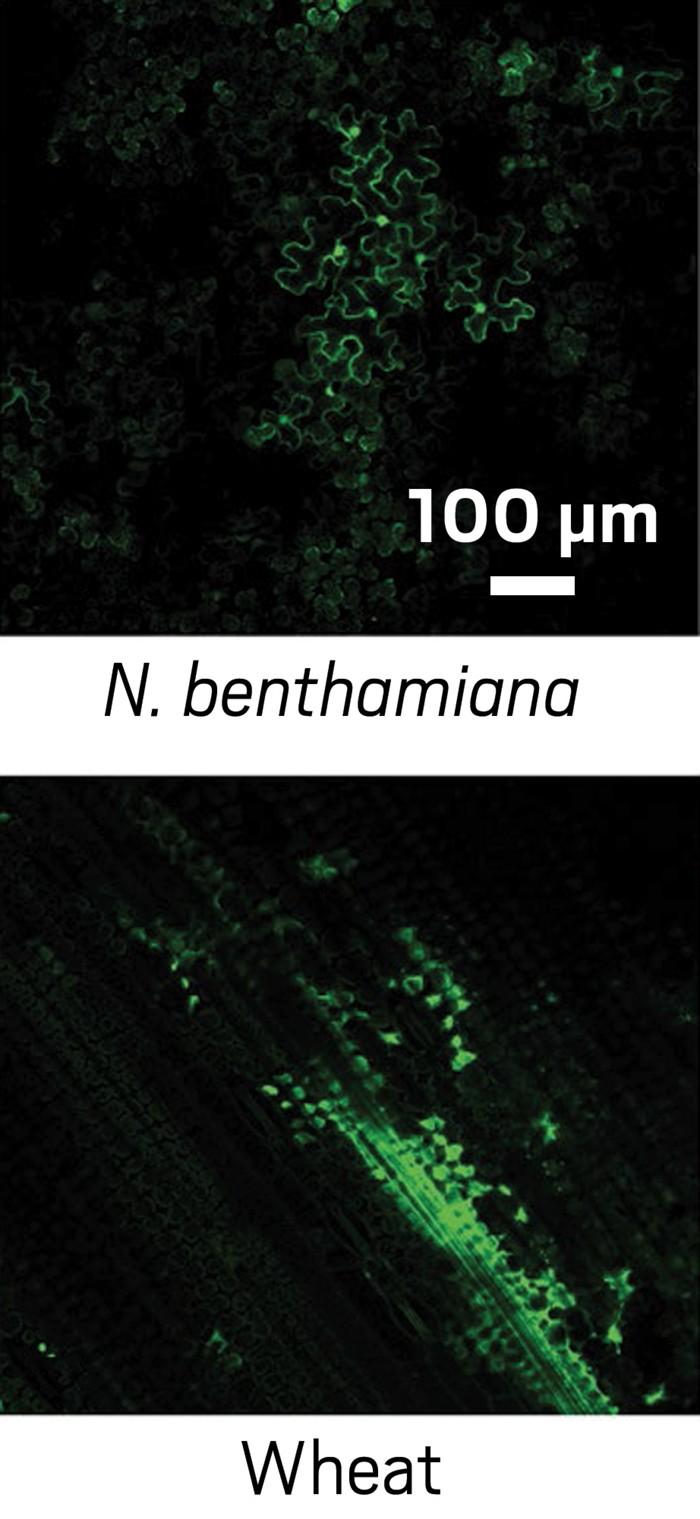 09709-scicon3-fluoroplant.jpg