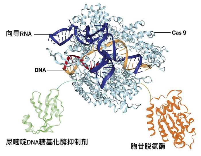09709-scicon40-structure-cn.jpg