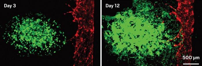 20190128lnp2-cells.jpg