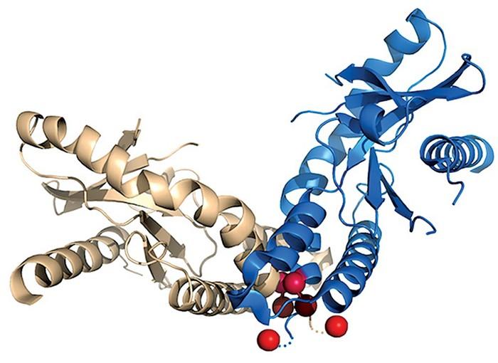 IFM Therapeutics looks to inhibit STING to treat autoimmune