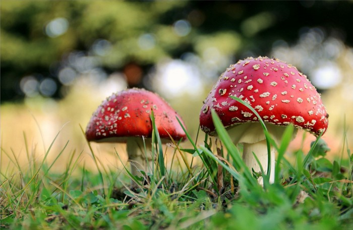 20190402lnp3-mushroom.jpg