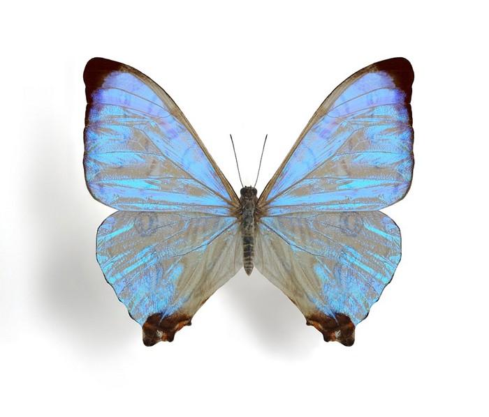 20190411lnp1-butterfly.jpg
