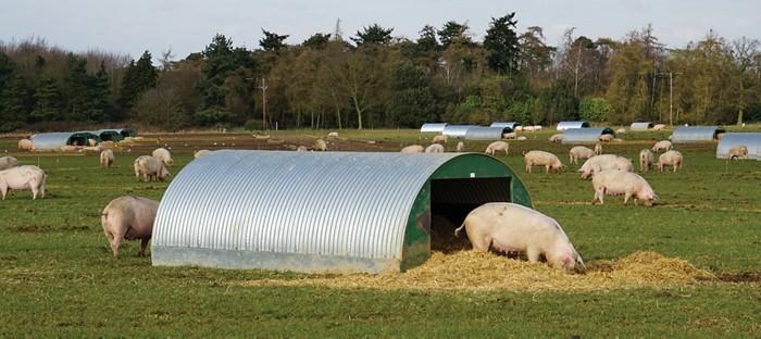 20190419lnp1-pigfarm.jpg