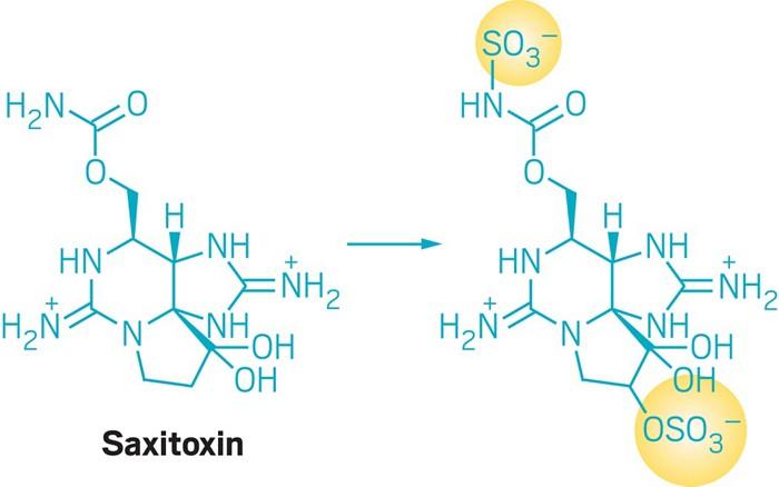 20190423lnp2-saxitoxin-update.jpg