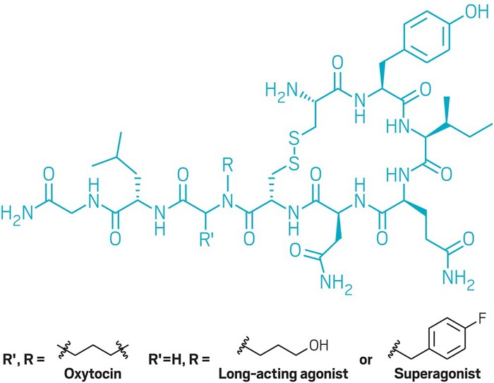 20190425lnp1-oxytocin.jpg