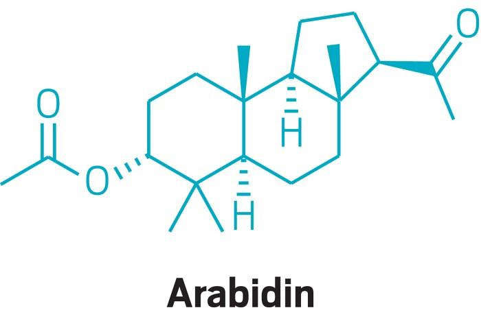 20190513lnp1-arabidin.jpg