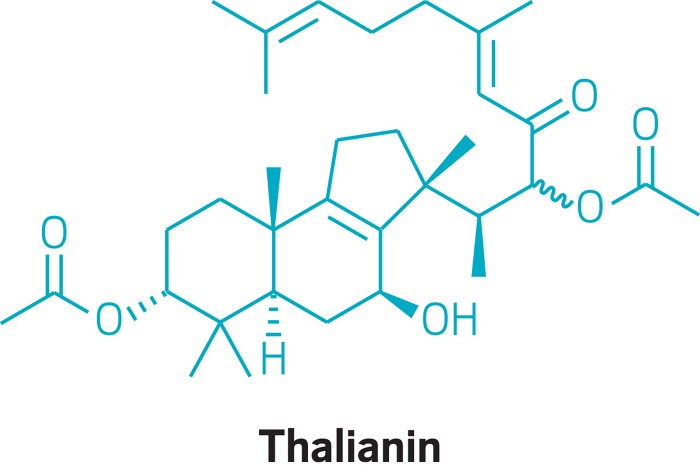 20190513lnp1-thalianin.jpg