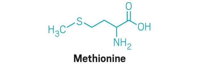 20190805lnp1-methionine.jpg