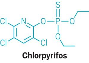 20190805lnp3-chlorpyrifos.jpg