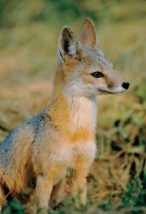 09811-polcon4-fox.jpg