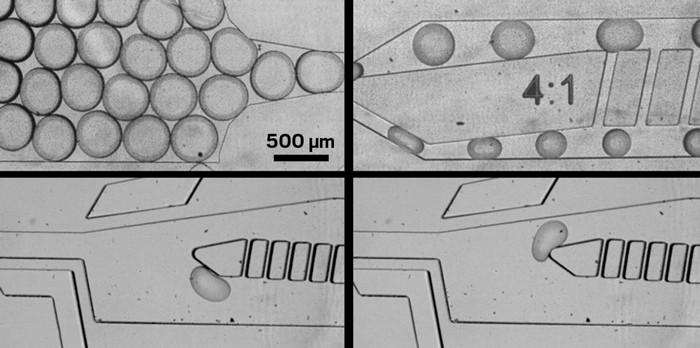 09802-scicon1-micrographs.jpg