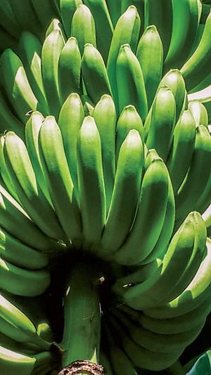 09806-feature1-banana.jpg
