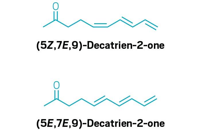 20200212lnp1-aroma.jpg